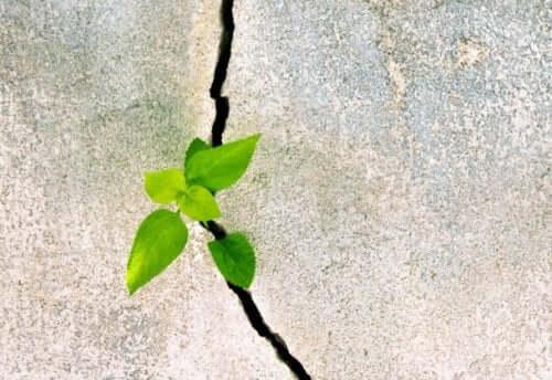 Resilienz kann geschaffen und stimuliert werden
