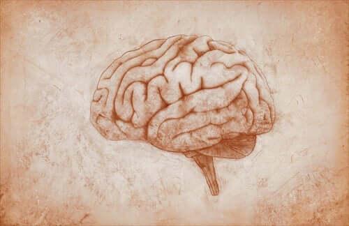 John Hughlings Jackson - Gehirn