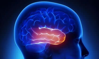 Klüver-Bucy-Syndrom - Temporallappen