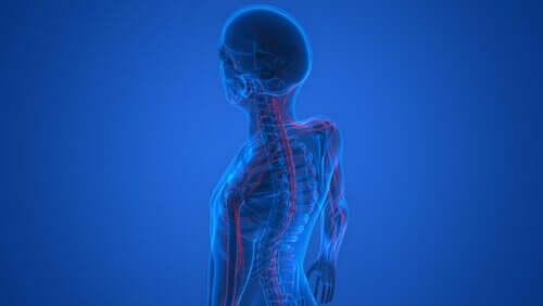 John Hughlings Jackson - Nervensystem