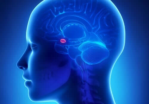 Klüver-Bucy-Syndrom - Amygdala