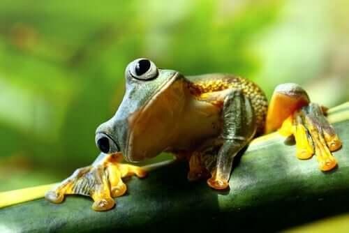 Kurzgeschichten - Frosch