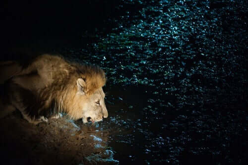 Kurzgeschichten - Löwe