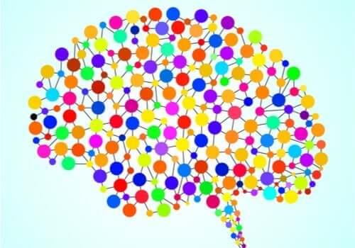 Die 97 bisher unbekannten Bereiche des Gehirns