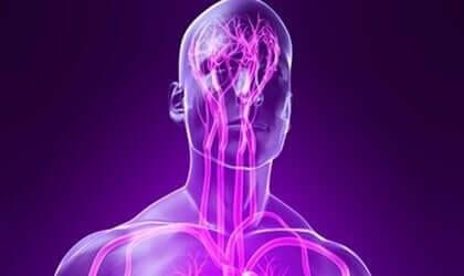 somatische Nervensystem - Nervenbahnen