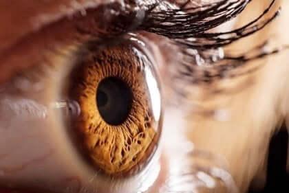 Optographie - Nahaufnahme eines Auges
