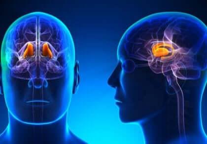 Studien weisen auf den Thalamus hin, wenn es um zentralisierte Schmerzen geht.