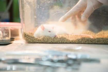 Das Rattenpark-Experiment entstand, um Ratten in einem natürlichen Lebensraum zu testen.