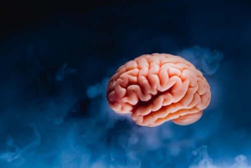 Dutton und Aron - Gehirn vor blauem Hintergrund