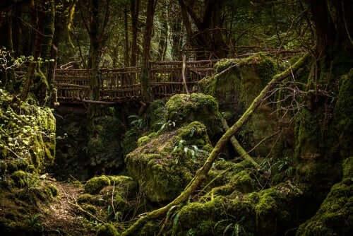 Eine Brücke mitten in einem Wald.