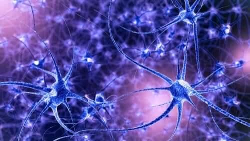 Gehirnplastizität: Eigenschaften und Typen