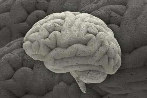 Drei faszinierende neurowissenschaftliche Fälle