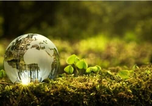 Umweltschutz: Was kannst du persönlich dazu beitragen?