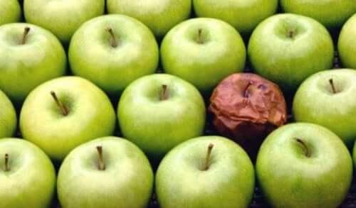 Die Fauler-Apfel-Theorie am Arbeitsplatz