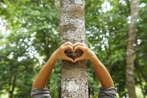 Umweltschutz - Hände, die ein Herz an einem Baum formen