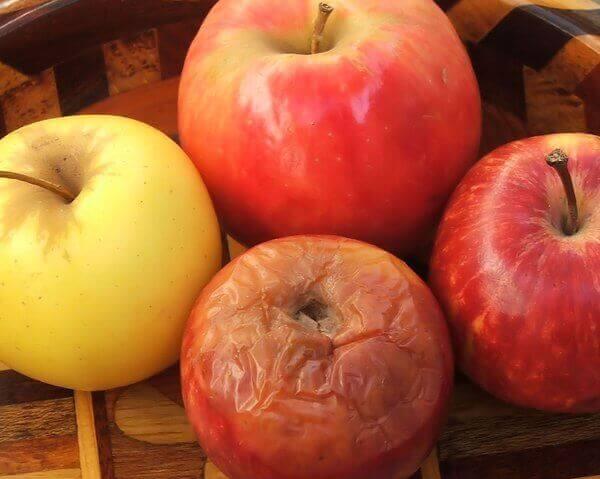 fauler Apfel - ein fauler Apfel und drei frische