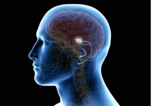 Die Substantia nigra: ihre Bedeutung für Bewegung und das Lernen