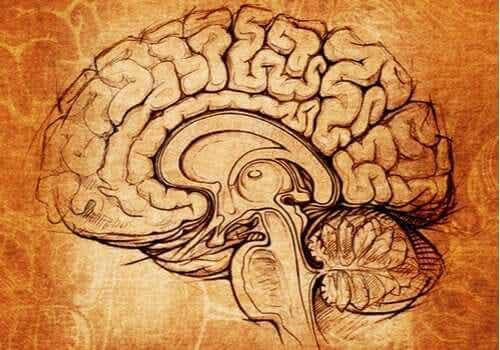 Der Nucleus lentiformis: Das Zentrum für Lernen und Motivation