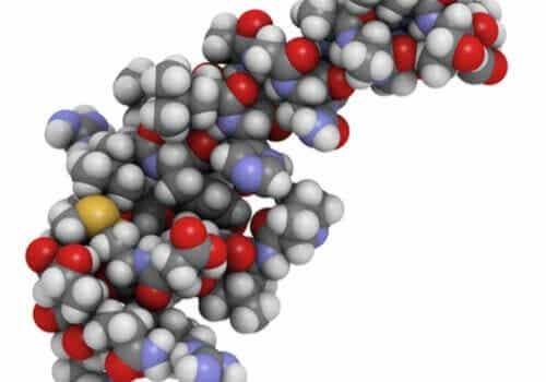 Orexine und ihr Einfluss auf den Schlaf und das Essverhalten