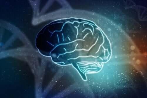 Anatomie des Enzephalons - Gehirn
