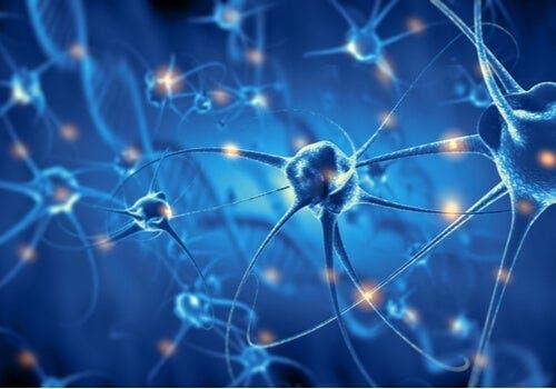 Neuronales Wachstum im Gehirn beim Sport