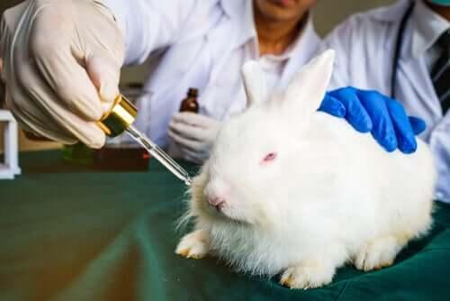 Tierversuche - Kaninchen