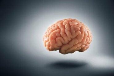 Wie Armut das menschliche Gehirn verändert
