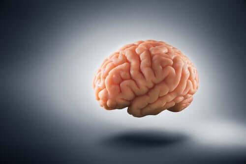 Armut - Gehirn