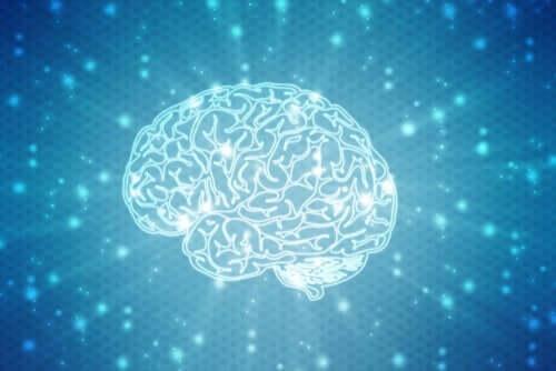 neuropsychologische Rehabilitation - Gehirn