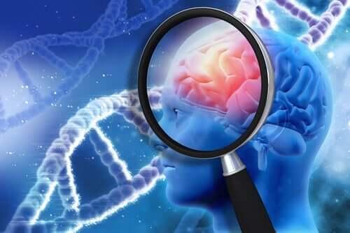 neuropsychologische Rehabilitation - Gehirn unter der Lupe