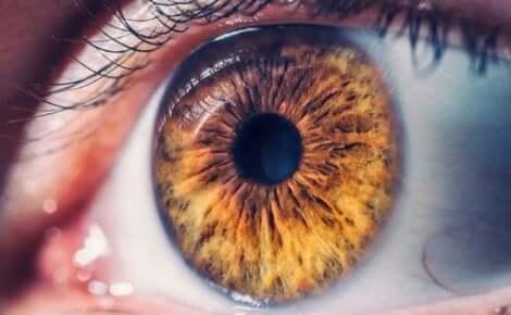 fotografisches Gedächtnis - Nahaufnahme eines braunen Auges