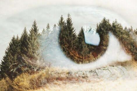 fotografisches Gedächtnis - Auge in einer Waldlandschaft