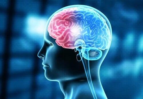 Schematische Darstellung des menschlichen Gehirns