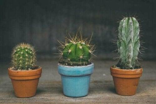 Eifersüchtige Freunde: Merkmale, Ursachen und Verhalten