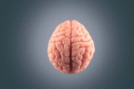 Das Gehirn ist für die Schmerzverarbeitung verantwortlich
