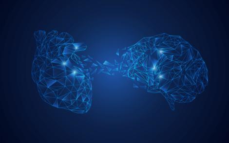 Deine Gedanken - Gehirn und Herz