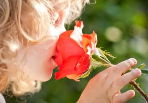 Die Psychologie des Geruchs - Kind riecht an einer Rose