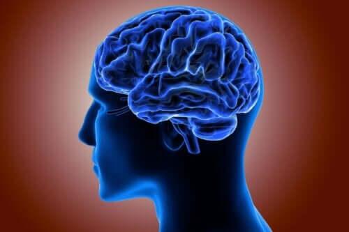 Pachygyrie - blaues Gehirn