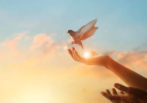 Trainiere dein Gehirn - Taube fliegt von einer Hand