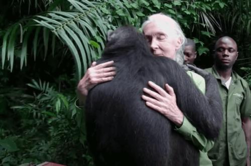 Jane Goodall und wie sie zu einer weltweit anerkannten Expertin und Aktivistin wurde