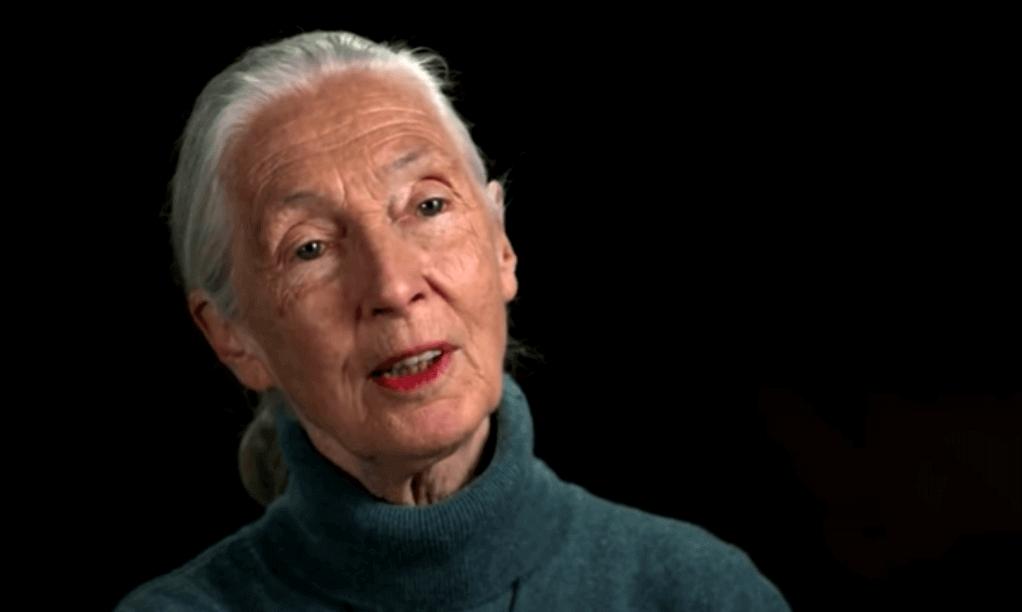 Jane Goodall - Foto