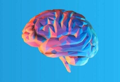 Warum hat das Gehirn eigentlich Falten?