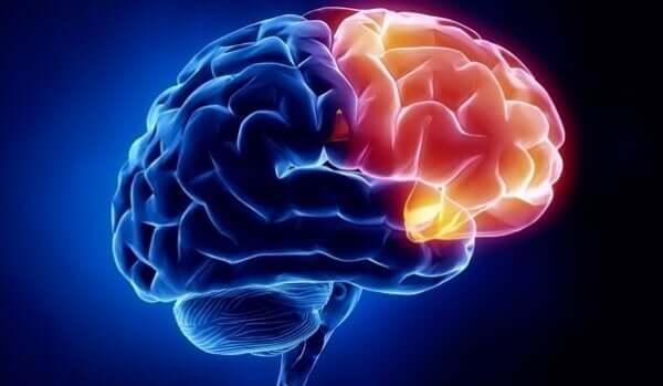 Wo entstehen Schuldgefühle? Gehirn