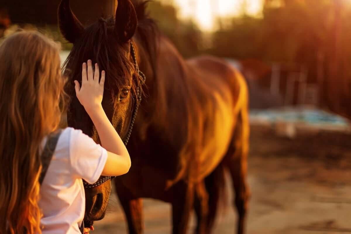 Eine Person, die versucht, ihre Angst vor Pferden zu überwinden