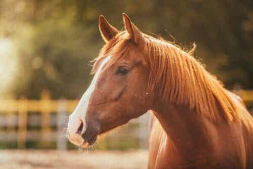Pferdephobie: Die Angst vor Pferden