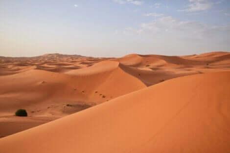 Yacouba Sawadogo - Sahara