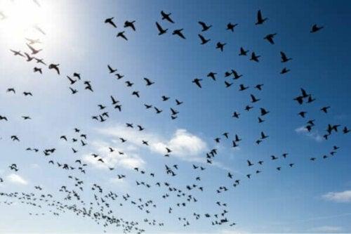 Ornithophobie oder die Angst vor Vögeln: Was du dagegen tun kannst!