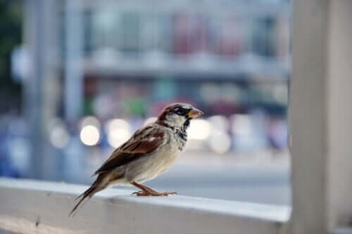 Ein Vogel auf einer Fensterbank: Überwinde deine Ornithophobie!