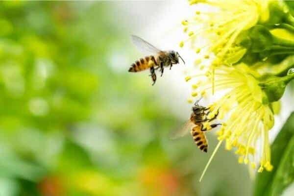 Apiphobie: Die Angst vor schwirrenden Insekten