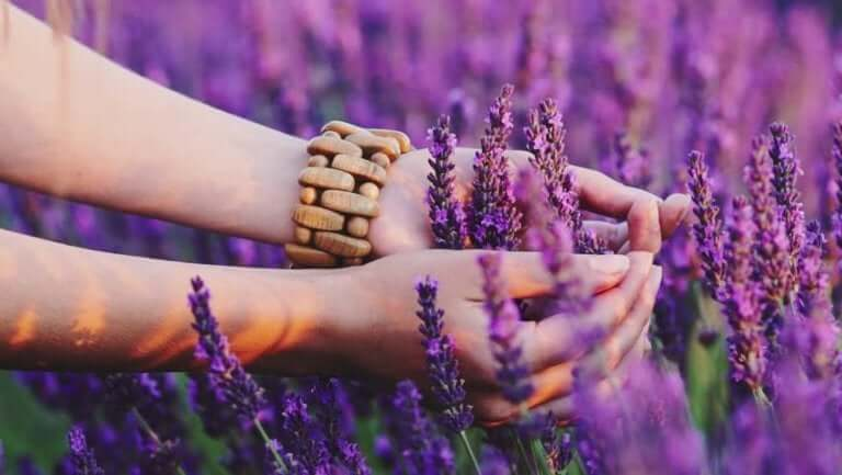 Mit dem Herzen wahrnehmen - Lavendel
